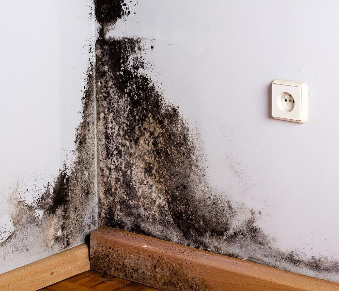Mold Remediation Top Reasons to Have a Black Mold Inspection