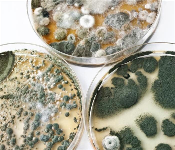 General Why Black Mold is Dangerous To Your Family